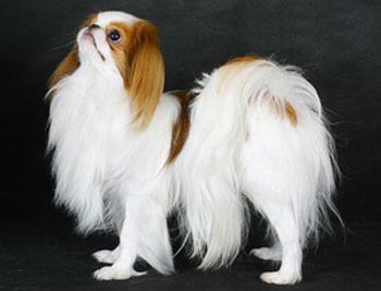 породы собак - Страница 4 Marik-08